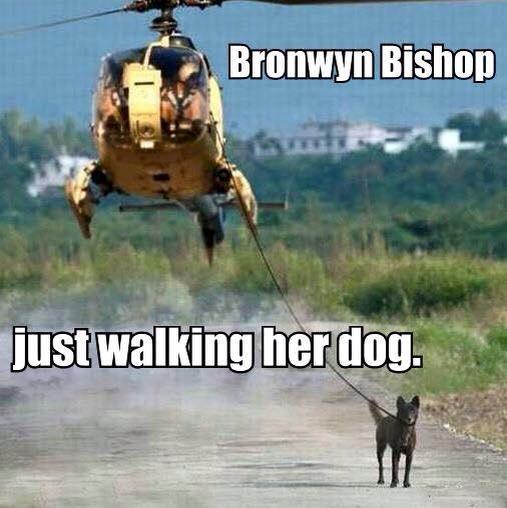 BB-WalkingDog